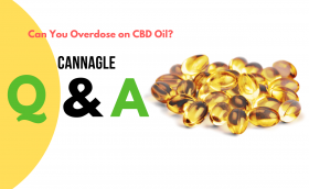 Can You Overdose On Cbd Oil?