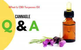 What Is CBD Terpenes Oil