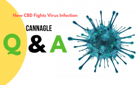 How CBD Fights Virus Infection