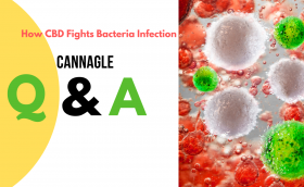 How CBD Fights Bacteria Infection