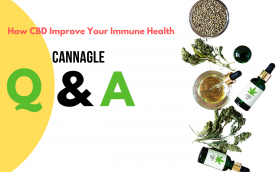 How CBD Improve Your Immune Health